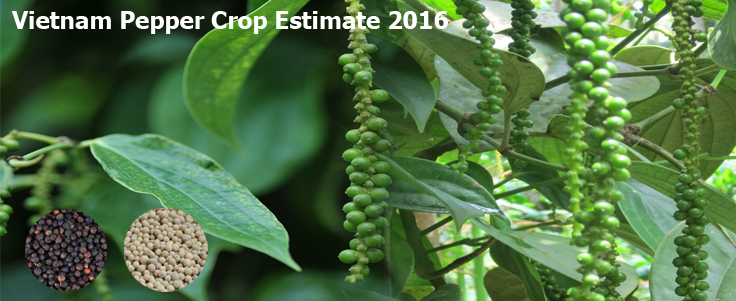 Vietnam Pepper Crop Estimate 2016
